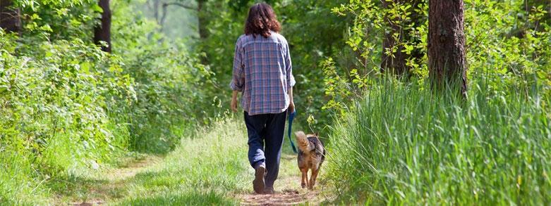 vaccinera husdjur fästingar tbe borrelia anaplasma